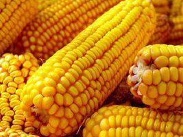 Queda das exportações de milho em outubro e recuo dos preços