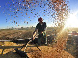 Anec vê melhora nas exportações de grãos do Brasil em 2017, com recorde na soja