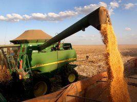 Conab eleva para 215 mi t a produção no Brasil e mantém em 53,2 mi a de Mato Grosso