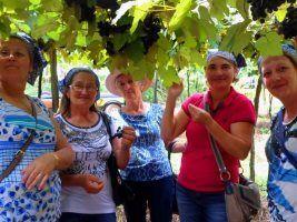 Roteiro da Uva e Vinho de Sarandi é atração para turistas no mês de janeiro