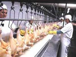 Egípcios buscam parcerias com avicultura brasileira