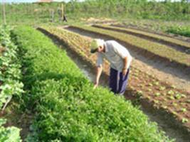 RS: Sistema de irrigação de R$ 33 é implantado no Território da Cidadania