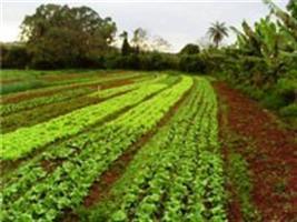 Como implantar e manter um quintal agroflorestal