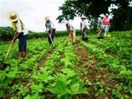 Maranhão alavanca produção de grãos com expansão de fronteiras agrícolas