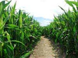 Morgan mostra recurso biotecnológico contra pragas do milho na Tecnoshow