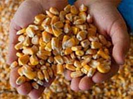 Conab libera milho para o Ceará, mas preço é alvo de protesto