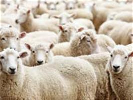 Instituições criam a Rede de Inovação na Ovinocultura