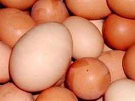 Avicultura brasileira busca ampliar exportação de ovos