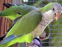 Publicadas normas para importação de aves ornamentais