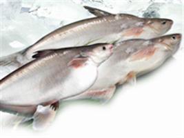 Desmistificando a origem do peixe Panga