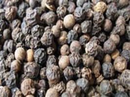 Safra de pimenta do reino deve gerar mais de R$ 40 milhões no ES