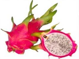Pitaia: aparência rústica esconde a delicadeza da fruta
