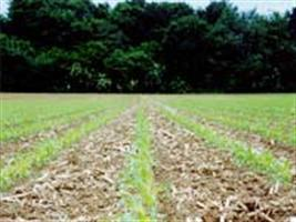 Curso mostra técnicas de plantio do Programa Agricultura de Baixo Carbono