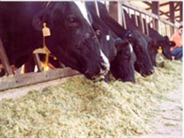 Alimento animal está dispensado de registro prévio