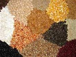 Show Rural - Nova regra a respeito de embalagens de sementes entra em vigor