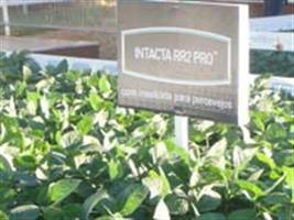 Monsanto mostra benefícios da INTACTA RR2 PRO™ na Expodireto Cotrijal 2013