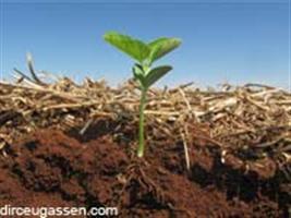 Sistema radicular e nutrição da soja em função da compactação do solo
