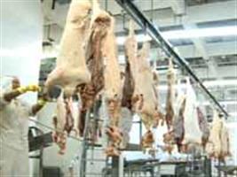Volume de carne suína para exportação caiu