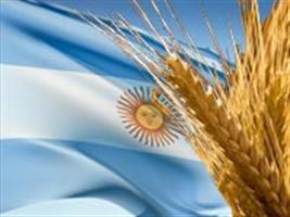 Produção instável de trigo na Argentina aumenta preço da farinha no Brasil