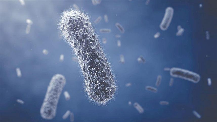 Resultado de imagem para Bactérias modificadas criam seda biossintética