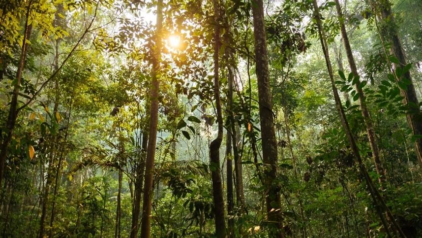 Resultado de imagem para A busca pelo desenvolvimento e preservação das florestas