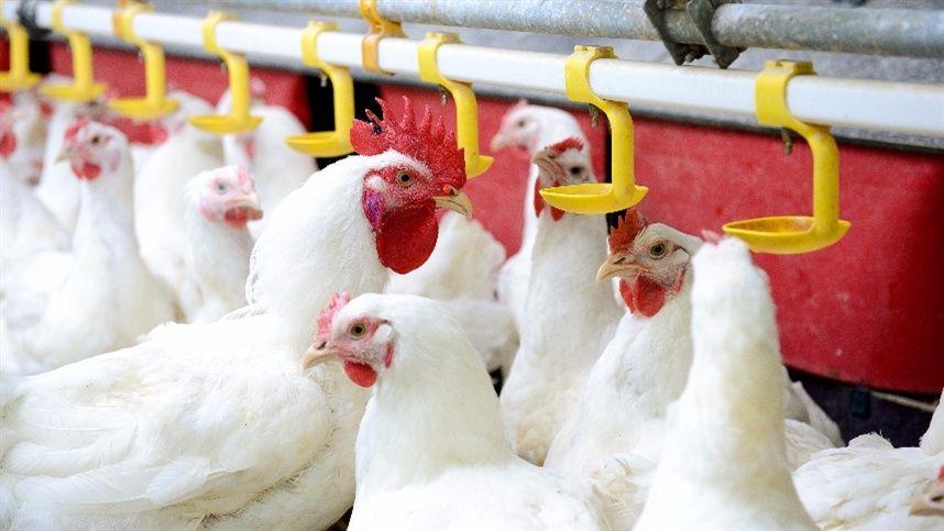 Resultado de imagem para Exportações totais de carne de frango crescem 64% em junho